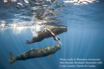 Whales Sri Lanka