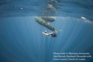 Whales - Mirissa