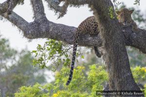 Yala National Park - Thissamaharama