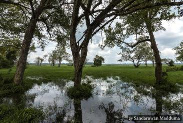 Laugala National Park