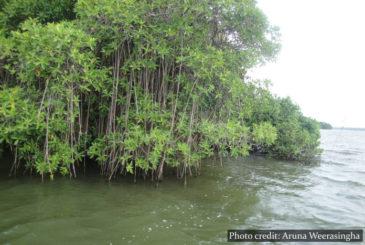 Boat safaris Muthurajawela Marsh Sri Lanka