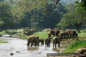 Pinnawala Elephant Orphanage - Sri Lanka