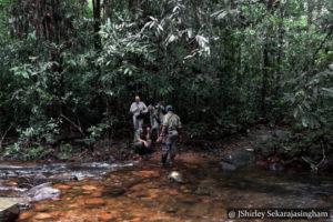 Makandawa Rain forest - Kitulgala