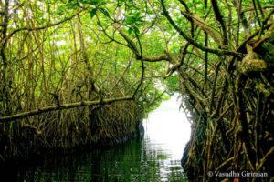 Maadu River - Balapitiya