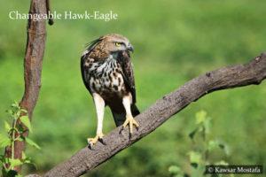 Udawalawe Wildlife National Park - Sri Lanka