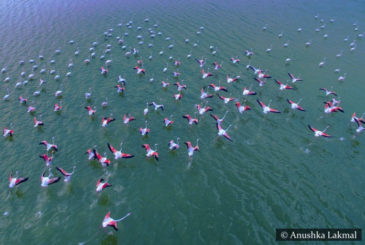 Flamingos Vankalai Bird Sanctuary