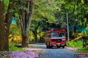 Public Buses - Sri Lanka