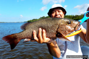 Mangrove Jack Bolgoda Lake