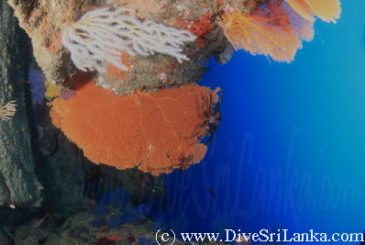 Deflection Rock of Snapper Alley - Scuba Dive Site - Colombo