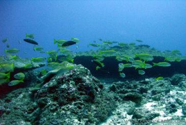Taprobane East - Scuba Dive Site - Colombo