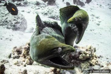 Moray Eels SCUBA Dive Sri Lanka