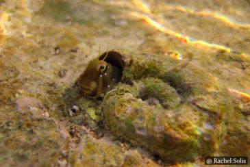 Sea-Slugs SCUBA Dive Sri Lanka