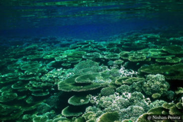 Bar Reef - Scuba Dive Site - Kalpitiya