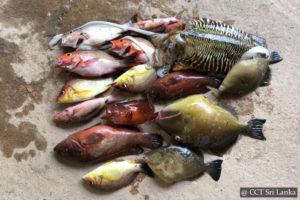 Sea Fishing Sri Lanka