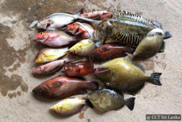 Deep Sea Fishing Sri Lanka