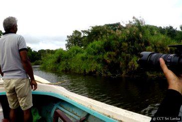 River safaris - From Gangewardiya & Eluwankulama